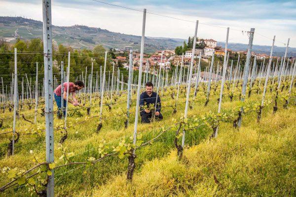Raineri - Vini - wineyards