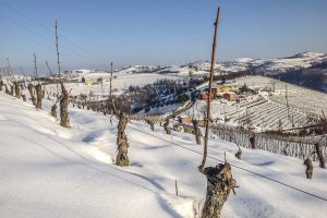 Raineri - Vini - wineyards snow
